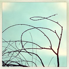 """Why. #tree #abstraction • <a style=""""font-size:0.8em;"""" href=""""https://www.flickr.com/photos/61640076@N04/8487645874/"""" target=""""_blank"""">View on Flickr</a>"""