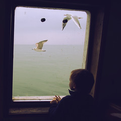 Ferry (Che-burashka) Tags: travel winter boy childhood ferry mr seagull dream istanbul dreams bosphorus omd em5 panasonic14mmf25 nofoplease