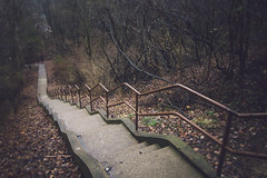 A Strange Dream (wesley peyton) Tags: blur leaves stairs forest dark woods moody dof steps creepy dreaming explore descending canon1022mm f3545 canon7d