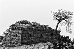 Stone and Wood (bsankaranarayan) Tags: wood india tree monochrome stone canon eos mono rocks story vision chennai tamilnadu southindia mahabalipuram cwc mahabs drytree 600d chennaiweekendclickers bsankaranarayan sankaranarayan sankarz sankarzshutter