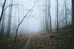Haunted Woods (.monodrift) Tags: morning mist fog forest woods atmosphere olympus omd em5