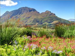 Gardens of the Delaire Graff Wine Estate, Stellenbosch, South Africa (robin denton) Tags: africa mountain mountains gardens landscape southafrica hdr stellenbosch westerncape delaire mountainscenery mountainphotography delairegraffestate