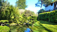 Golden Gate Park Japanese Tea Garden Tiltshift (A.Currell) Tags: california park county city usa garden japanese golden bay miniature gate san francisco tea fake shift area northern maker tilt effect tiltshift tiltshiftmaker