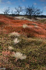 Colorful dunes (j-ette) Tags: morning winter nature colors dunes duinen ochtend drunenseduinen ruighaarmos bristlyhaircap