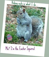 You know who I am (MissyPenny) Tags: squirrel pennsylvania wildlife easterngreysquirrel bristolpennsylvania pdlaich missypenny