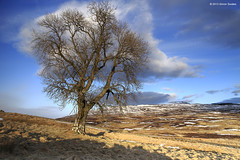 Cotton wool tree (SwaloPhoto) Tags: winter tree scotland landscapes shadows perthshire lone a924 badyo canoneosm