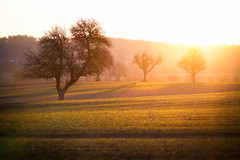 chasing the light ... (Dennis_F) Tags: trees light sun tree field zeiss sunrise germany deutschland licht sony feld felder fullframe rise dslr sonne bume sonnenaufgang morgen guten baum 135mm morgens 13518 a850 sonyalpha sonydslr vollformat cz135 zeiss135 dslra850 sonya850 sonyalpha850 alpha850 sony135 sonycz135