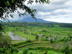 landschap Noord Bali (Gerda Le Blanc) Tags: bali mountain nature field landscape rice