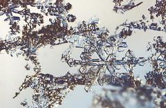 Schneeflocke - snowflake (cw_pic) Tags: snowflake winter water array schneeflocke
