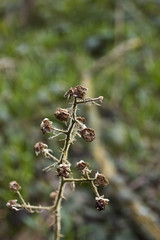 DSC_0683 (dan-morris) Tags: wood sunset white black tree green wet field grass forest photo leaf moss spring nikon shoot berries bokeh bark dew 1855mm dslr depth vr damp f3556g 1855mmf3556gvr d3100