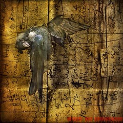 The Crow #EXILEHURTS  #competitionentry (Viveca Koh ARPS) Tags: fineartphotography londonphotographers fineartphotographer londonphotographer vivecakoh instagram crystalpalacephotographer vivecakohphotography crystalpalacephotography southlondonphotographer southlondonphotography crystalpalacefineartphotographer crystalpalacefineartphotography southlondonfineartphotographer southlondonfineartphotography vivecakoharps