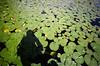 Lily pads, Lake Washington. (Matt Benton) Tags: colournegative 35mm zeissikon voigtlandersuperwideheliar15mmf45