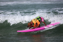 "Surf Dog Competition-EK-073016 (55) • <a style=""font-size:0.8em;"" href=""http://www.flickr.com/photos/25952605@N03/28622635492/"" target=""_blank"">View on Flickr</a>"