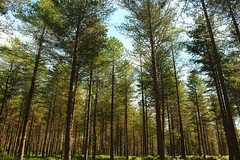 Infinite Forest Canon 700D  18mm  ISO 200  f8  1/40 (Martin Donohue) Tags: ifttt instagram mdonohue95 infinite forest canon 700d  18mm iso 200 f8 140