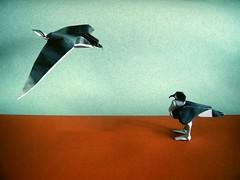 Seagulls - Peter Stein (Rui.Roda) Tags: origami papiroflexia papierfalten seagull gaviota gaivota peter stein