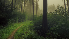 Misty (Netsrak) Tags: rheinbach nordrheinwestfalen deutschland de mist misty fog foggy haze hazy nebel wald forest forst woods nature natur landscape landschaft outdoor tree trees baum bume gras grass leaf leaves blatt bltter green grn mood stimmung atmosphre atmosphere