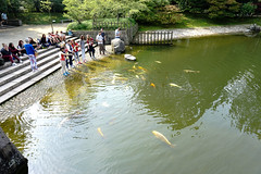 Fish Feeding Time (UnsignedZero) Tags: animal belgium fish hasselt item japanesetuin landscapes landscaping object out outdoor outdoors outside outsides sunny water weather