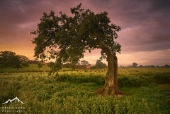 The Bendy Tree (.Brian Kerr Photography.) Tags: cumbria edenvalley mist tree sunrise lazonby sony a7rii beautiful weather landscape photography