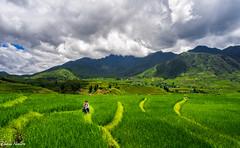 Sapa, Vietnam (tuanduongtt8018) Tags: northwest vietnam landscape outdoor nature tree dry morning sunrise sky clouds sierra flank hdr mountainous mountains