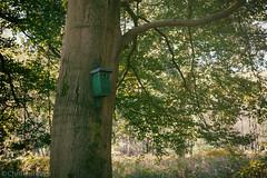 Vogelhuschen im Nationaal Park De Hoge (Christian Passi - Steher82) Tags: nationaal park de hoge nederland wald wood netherland baum tree sonnenlicht vintage a6000 sonya6000 vogel bird homesweethome festbrennweite natur nature