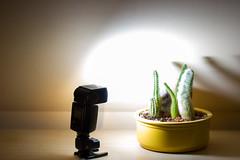 flashlight (Jules Marco) Tags: flashlight blitzlicht licht light flickrfriday flash katus cactus blumentopf plantpot canon eos600d tamronsp90mmf28divcusdmacro11f004 speedliteyn468ii