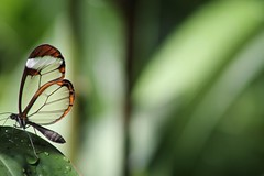 b586f141455195.57a6f23b82705 (theforge-stuttgart) Tags: nature butterfly explore markro