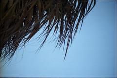 film.737 (jeremy jewell) Tags: film olympusom2n lomography100 puntacana dominicanrepublic