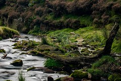 Stream at Fairbrook Peak District (21mapple) Tags: fairbrook landscape water stream tree stump dead gras moss stones cloudy misty ou outdoors outdoor outside countryside canon750d canon canoneos750d canoneos nationaltrust nt peakdistrict peak district heather