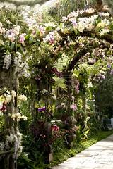 All Photos-3449 (hoangtumuadong2056) Tags: 2011orchidshow conservatory thenewyorkbotanicalgarden winter