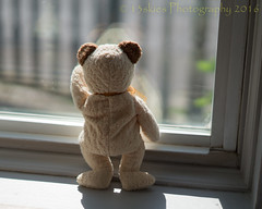 """I am in here"" (HTBT) (13skies) Tags: happywindowwednesday glass bear teddybear teddybearatthewindow cuddly cute looking window outside lookingout standing wanting daytime sunshine sunlight hww"