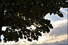 break through to you... (5 :)) Tags: nyc blue sky sun sunlight tree green leaves clouds nikon break you through breakingthrough highabove d3100