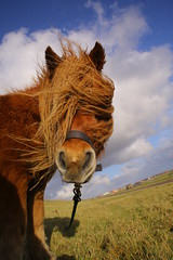 Bad hair day (jan-willem wolf) Tags: holland canon longhair nederland pony dijk redhair dike noordholland petten 5dmarkiii janwilllemwolf tamronsp247028usd