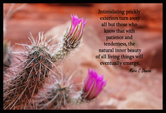 """Maria C Dawson: Stupefied """"Prickly Exteriors"""" (Maria C Dawson