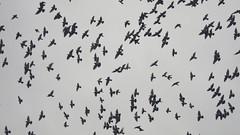 York birds