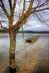 Pateira flooded (Jos_Eduardo) Tags: tree flood deck rvore aveiro cais inundao a350 sonyalpha pateiradefermentelos joseduardophotography