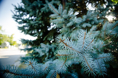 blue spruce (Michael W. May) Tags: life sunlight tree nikon unitedstates michigan wideangle needles bluespruce whitecloud d7000