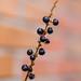 bricks & berries