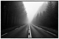 (Herv KERNEIS) Tags: road trees blackandwhite bw france fog forest paint noiretblanc perspective nb route arbres normandie brouillard bitume apn trix400 bassenormandie lalandedegoult silverefex2 fortdecouves sonyrx100