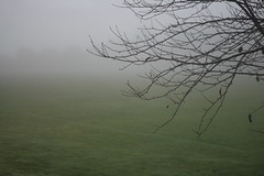 (hazel.jane) Tags: winter tree field grass leaves fog eerie fade