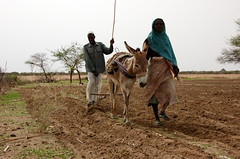 Ploughing the Difficult Land - Sudan (UNEP Disasters & Conflicts) Tags: africa sudan training environment climatechange drought conflict disaster peace development agriculture farmers westdarfur woman unep unenvironment