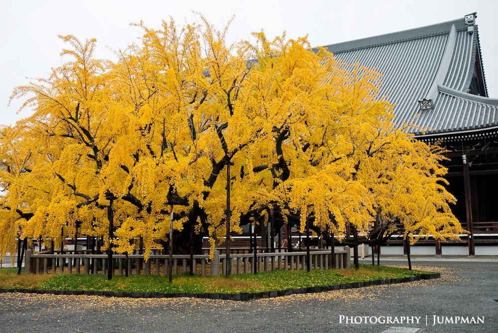 2012_Momiji_29