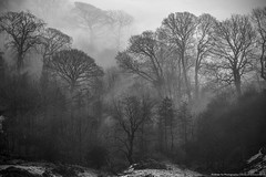 trees in the mist (awhyu) Tags: park trees mist photography hope cross district derbyshire peak andrew national valley inversion yu tor mam hollins
