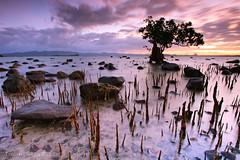mangrove sunrise (jlvsalazar) Tags: beach sunrise long exposure philippines coastal mangrove quezon lucena