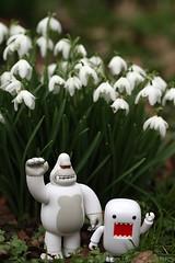 Toybox 2013 - Lurking In The Garden (cazphoto.co.uk) Tags: domo photowalk snowdrops harlow domokun kingken alby canoneos7d thegibberdgarden whiteken canon100mmeff28lisusm 240213 toybox2013 toyboxfeb2013 cfdpw44