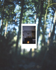 (daphne og.) Tags: film forest project photography woods fuji mini days scan instant 365 instax