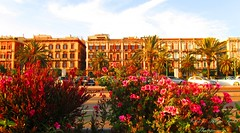 A pink and sweet-scented welcome... (Patrizia Ilaria Sechi) Tags: pink flowers roma colors palms town mediterranean day sardinia bright sunny via promenade cagliari oleanders