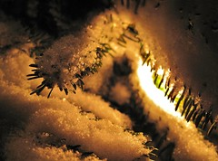 HMM ~ forgotten places (karma (Karen)) Tags: trees winter light snow texture home lights shadows dof bokeh maryland baltimore macros 4winter forgottenplaces macromondays