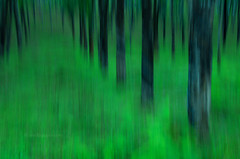 Abstract evergreen rainforest (mechstar) Tags: abstract green nikon rainforest evergreen wayanad gupta malabar sandip