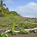 Resti di vegetazione sulla spiaggia di Tortuguero