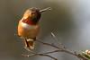 Howzabout a kiss. (JsonR) Tags: delete2 save3 delete3 save7 save8 delete save save2 save4 save5 save6 allenshummingbird savedbythedeletemeuncensoredgroup maleallenshummingbird